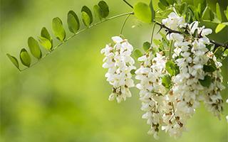 奈良のハチミツ