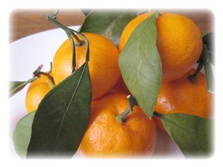 主要成分 オレンジ