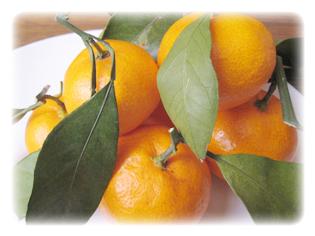 主要成分 オレンジ果皮油(天然精油)