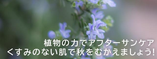 植物の力でアフターサンケア くすみのない肌で秋をむかえましょう!