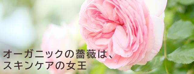 オーガニックの薔薇は、スキンケアの女王